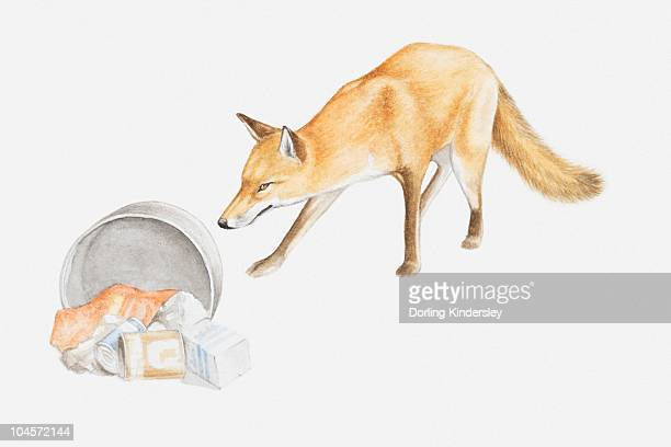 illustration of a red fox (vulpes vulpes) scavenging for food around bin - scavenging stock illustrations
