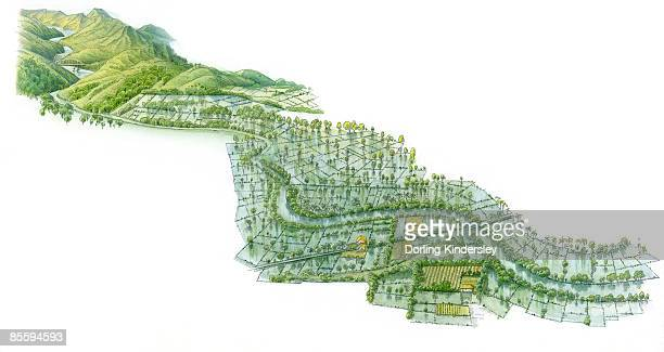 ilustraciones, imágenes clip art, dibujos animados e iconos de stock de illustration of a river valley showing uplands, flooded fields after river has burst its banks, and rice growing near river where paddy fields are irrigated - valle