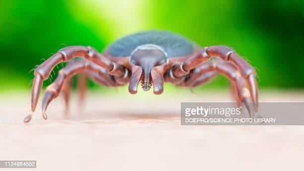 illustration of a tick crawling on human skin - ライム病点のイラスト素材/クリップアート素材/マンガ素材/アイコン素材