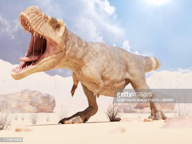 illustration of a t-rex - wildlife stock illustrations