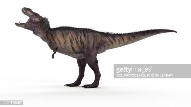 illustration of a t-rex - t rex stock-grafiken, -clipart, -cartoons und -symbole