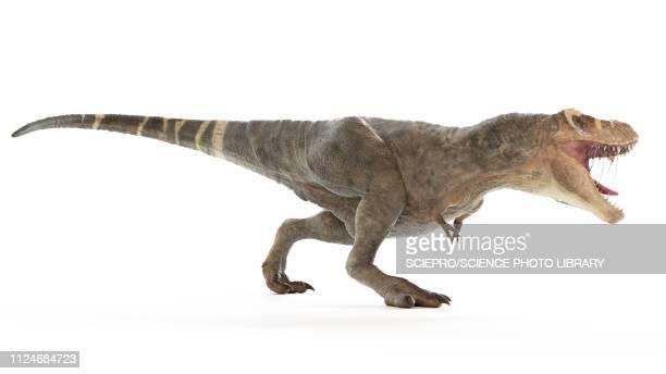 illustration of a t-rex - paleontology stock illustrations
