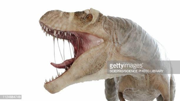 illustration of a t-rex - roaring stock illustrations