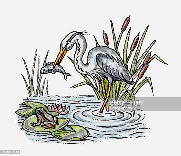 Illustration of a white stork holding fish in its beak, nearby a frog sitting on lily pad