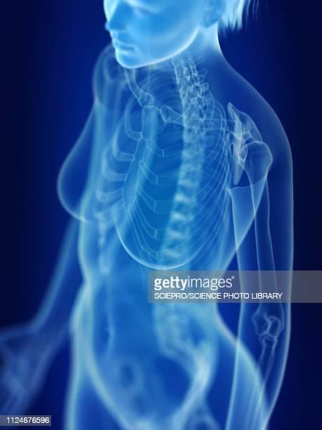 illustration of a woman's skeleton - human back stock illustrations, clip art, cartoons, & icons
