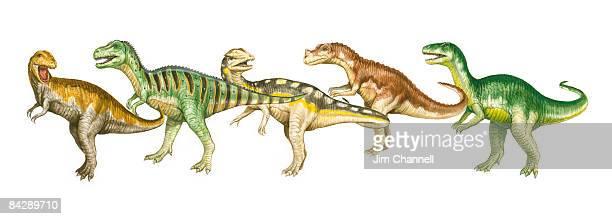 Illustration of Albertosaurus, Tarbosaurus, Dilophosaurus, Ceratosaurus, and Allosaurus dinosaurs