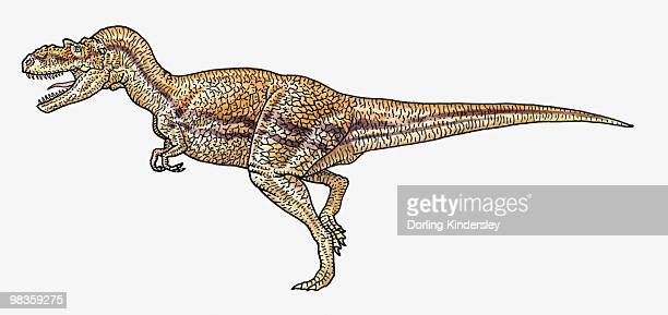 Illustration of Albertosaurus tyrannosaurid theropod dinosaur