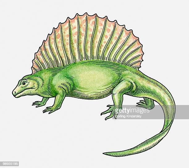 Illustration of an Epaphosaurus, sail-backed dinosaur from Late Carboniferous era