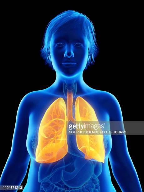 illustration of an obese woman's lung - cardiopulmonary system stock illustrations, clip art, cartoons, & icons