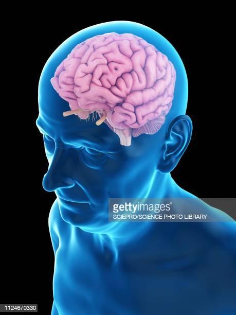 stockillustraties, clipart, cartoons en iconen met illustration of an old man's brain - ziekte van alzheimer