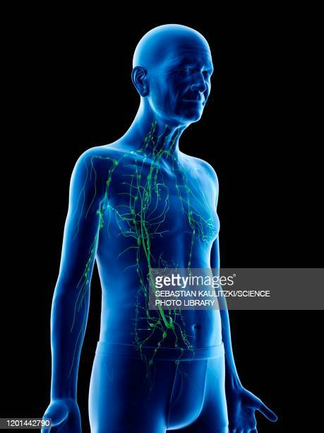 illustration of an old man's lymphatic system - translucent stock illustrations