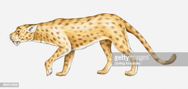 Illustration of an Oligocene Sabre-toothed cat (Hoplophoneus sp.), side view