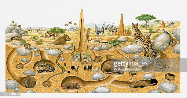 illustration of animals living in desert above and and in burrows - aardvark stock illustrations