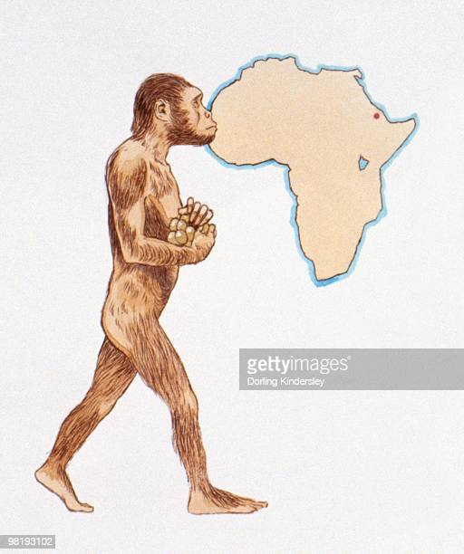 illustration of australopithecus afarensis and map of africa pinpointing discovery location - australopithecus stock illustrations