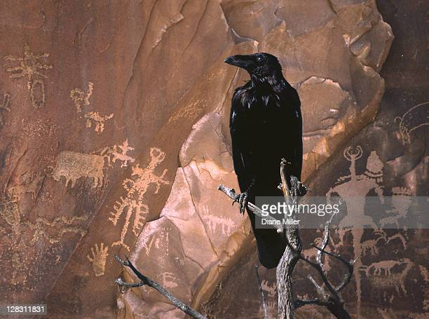 illustration of black crow perched near rock with petrogyphs - the past stock illustrations