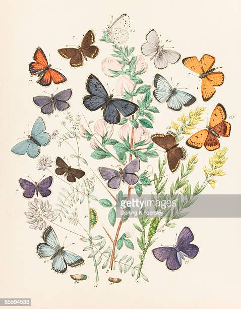 Illustration of butterflies and green caterpillars on plant and flower stems