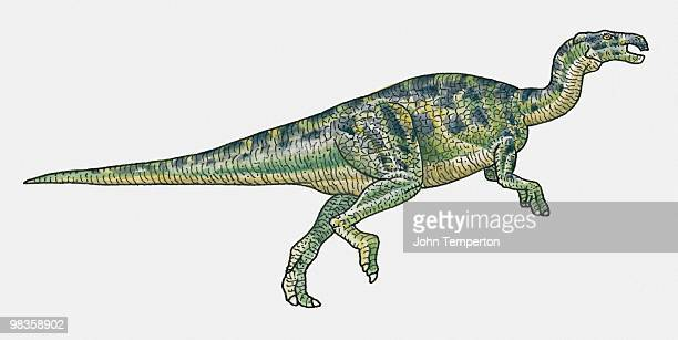 Illustration of Camptosaurus dinosaur