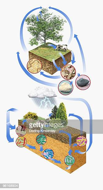 Illustration of carbon cycle and nitrogen cycle