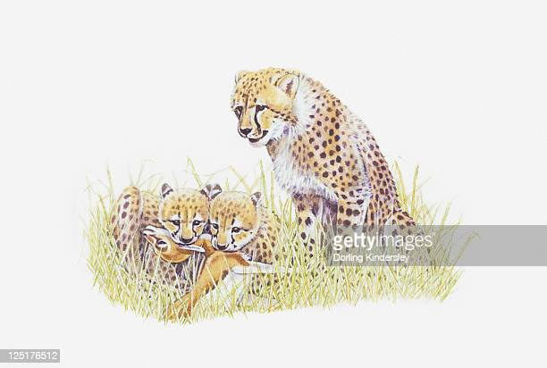 Illustration of cheetah with young feeding on prey