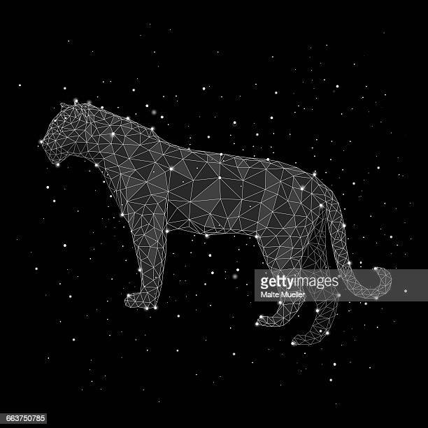 illustration of constellation forming leopard against black background - constellation stock illustrations