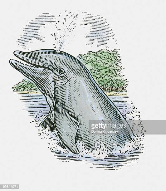 Illustration of Dolphin showing stale air rising from blowhole on top of head