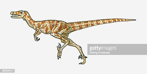 Illustration of Dromaeosaurus theropod dinosaur