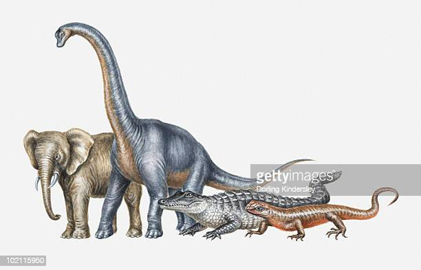 illustration of elephant, dinosaur, crocodile and lizard - group of animals stock illustrations, clip art, cartoons, & icons
