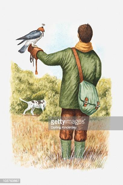 illustration of falconer with a hooded falcon perching on his arm and pointer dog nearby - falconry stock illustrations