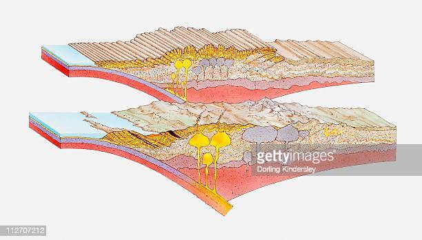 illustration of fold mountains - model to scale stock illustrations, clip art, cartoons, & icons