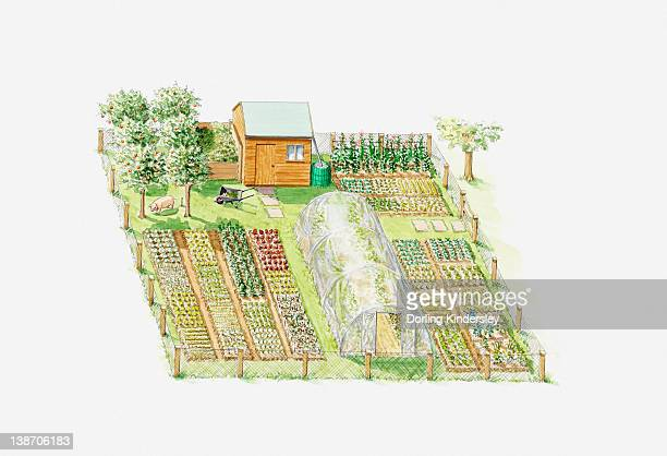 Illustration of fruit and vegetable allotment with greenhouse and shed