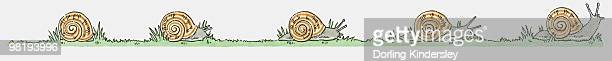ilustrações de stock, clip art, desenhos animados e ícones de illustration of garden snails (helix aspersa) on the move - caracol de jardim