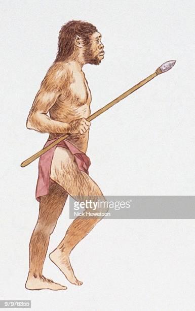 Illustration of Homo erectus holding spear