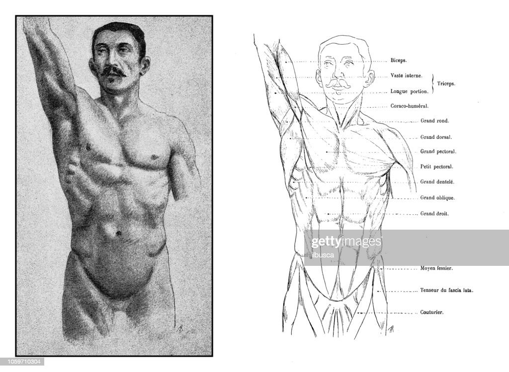 Illustration Of Human Body Anatomy From Antique French Art Book High Res Vector Graphic Getty Images