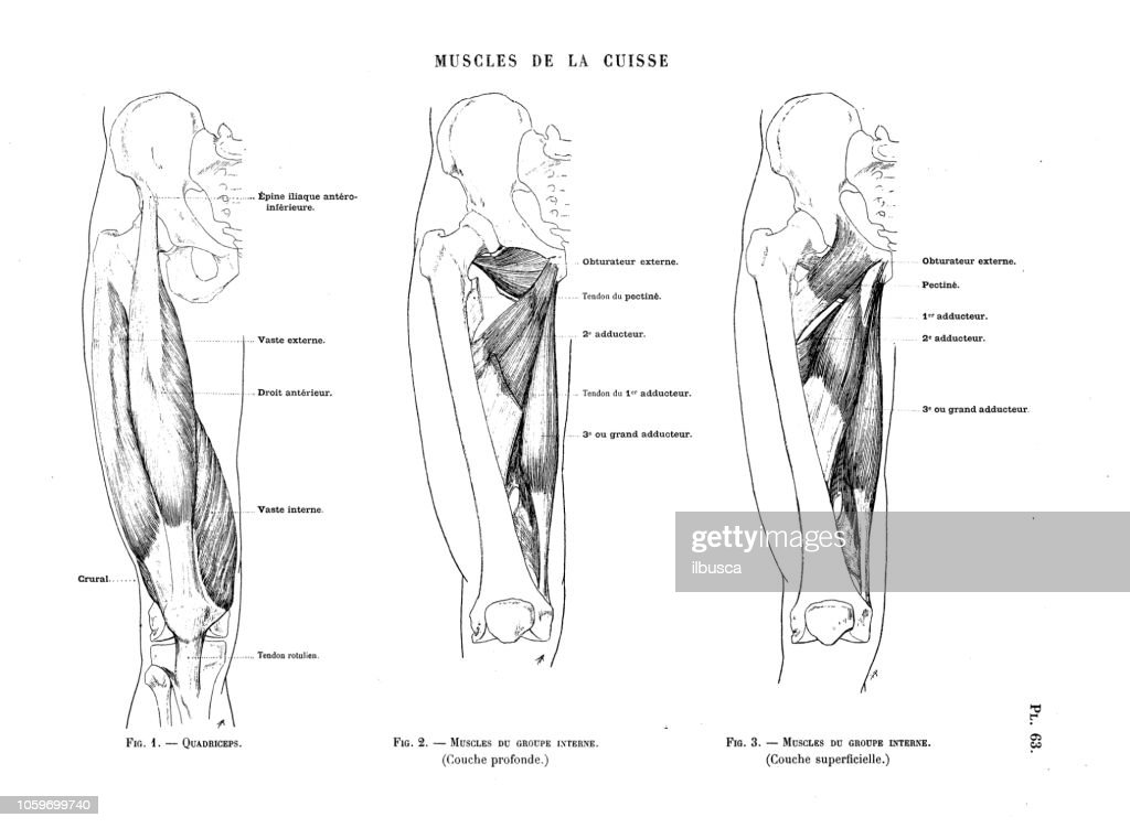 Illustration Of Human Body Anatomy From Antique French Art Book Leg And Foot Muscles High Res Vector Graphic Getty Images