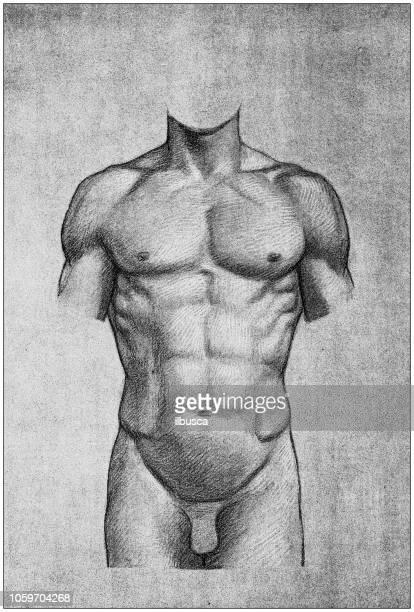 bildbanksillustrationer, clip art samt tecknat material och ikoner med illustration av människokroppen anatomi från antika franska konstbok: torso - naket
