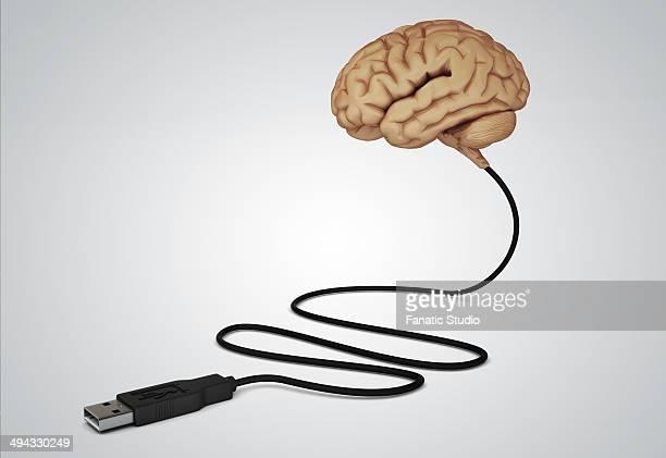 ilustrações, clipart, desenhos animados e ícones de illustration of human brain connected with usb cable over gray background - usb cable