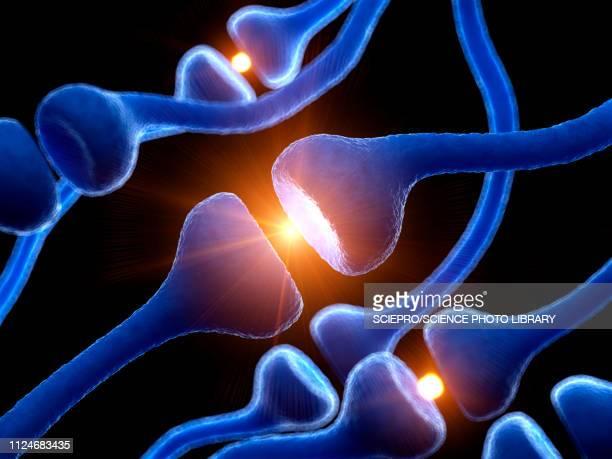 illustration of human receptors - synapse stock illustrations