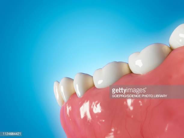 illustration of human teeth - teeth stock illustrations
