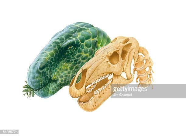 illustration of iguanodon dinosuar head with mottled green skin and iguanodon skull - mottled skin stock illustrations