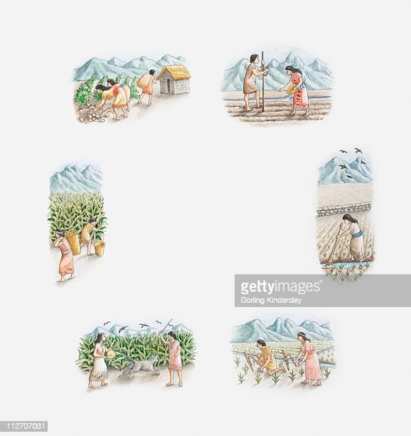 ilustraciones, imágenes clip art, dibujos animados e iconos de stock de illustration of incas cultivating maize and potatoes, spring, summer, autumn and winter - inca
