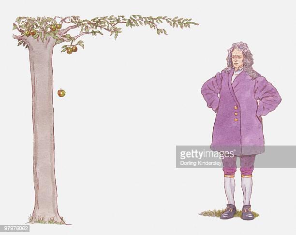illustration of isaac newton watching apple falling from tree - gravitational field stock illustrations