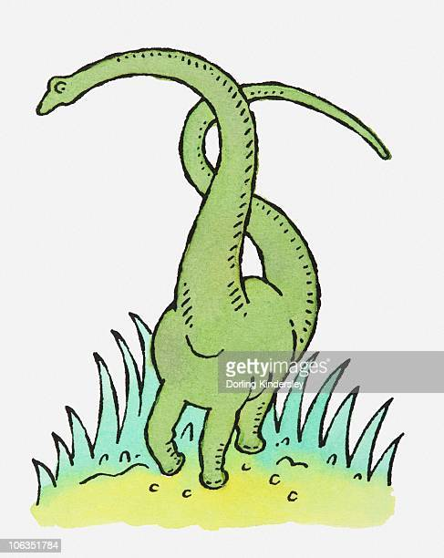 Illustration of large green dinosaur with long neck and tail