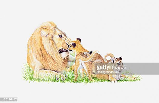 Illustration of lion with cubs