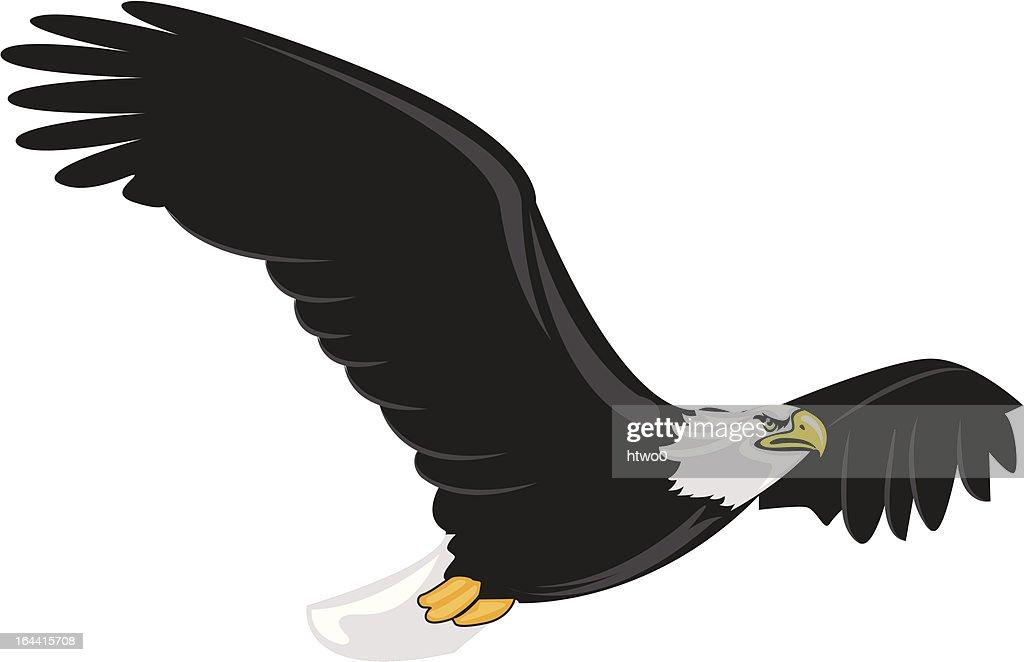 Illustration of majestic adult bald eagle