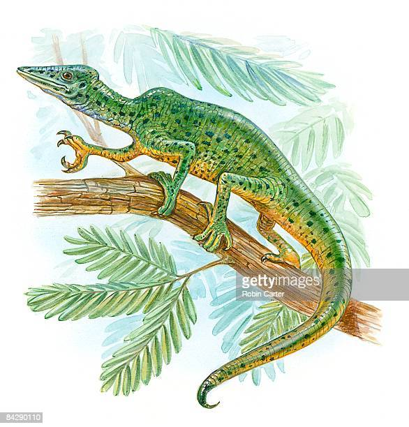 Illustration of Megalancosaurus standing on branch of tree showing sharp claws on front leg