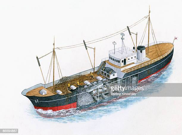 Illustration of men on deck of trawler with commercial fishing net, and cross section showing men gutting fish below deck