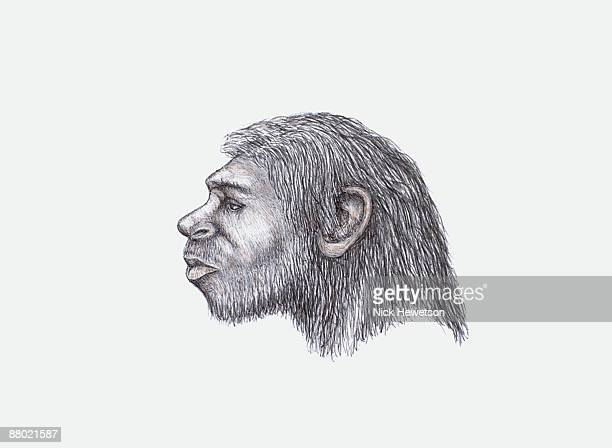 Illustration of Neanderthal head