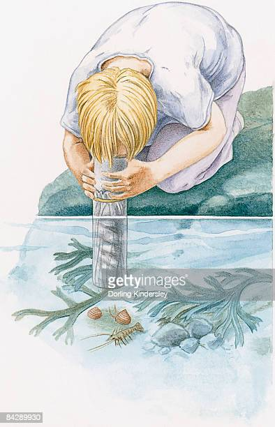 Illustration of of boy kneeling on rock looking through underwater viewer at shrimp and snails on seabed