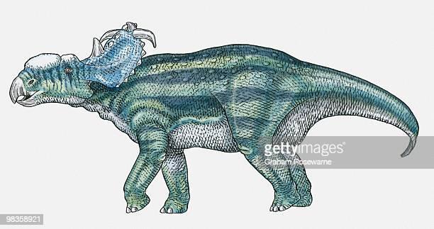 Illustration of Pachyrhinosaurus ceratopsid dinosaur
