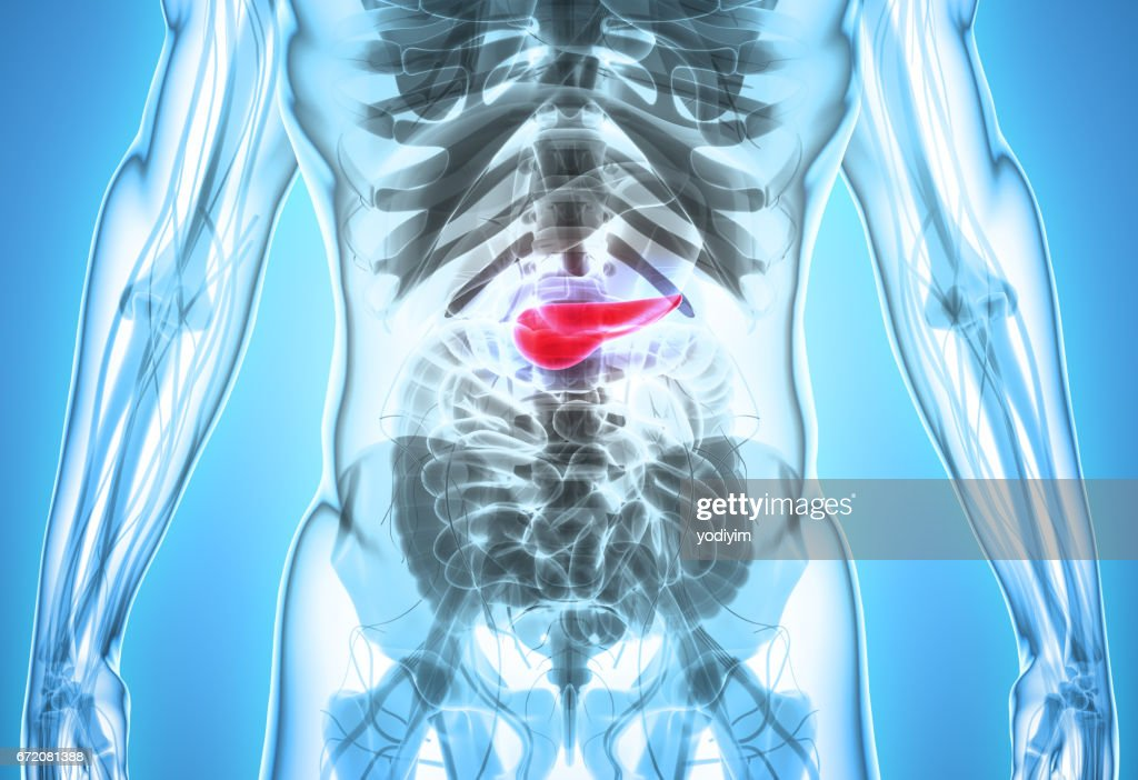 3d Illustration Of Pancreas Part Of Digestive System Stock